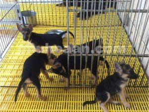 Kích thước tấm lót sàn chuồng chó trên thị trường