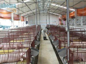Chuồng trại của vật nuôi cần đảm bảo các yêu cầu kỹ thuật gì?